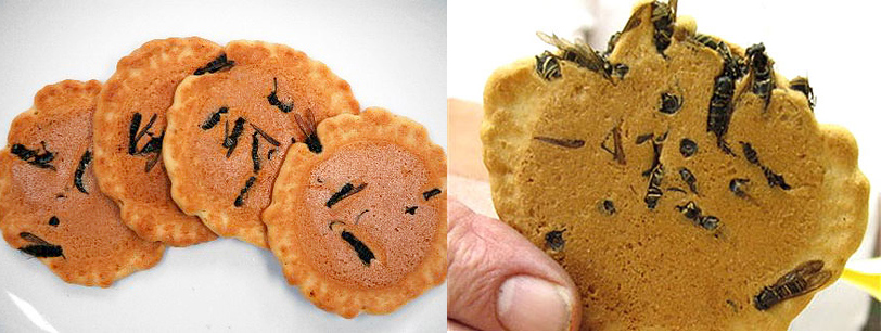 Gastronomic adventure wasp cracker from Japan