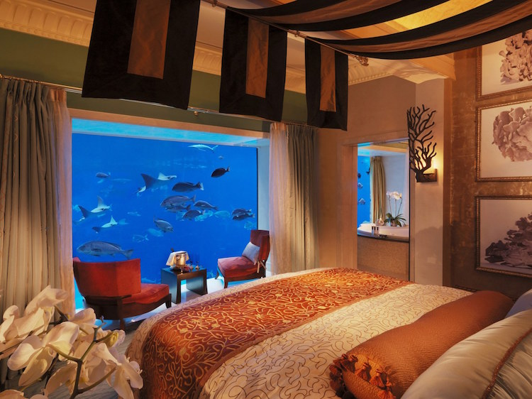 Life Underwater, Hotel Rooms with Spectacular Views of the Ocean